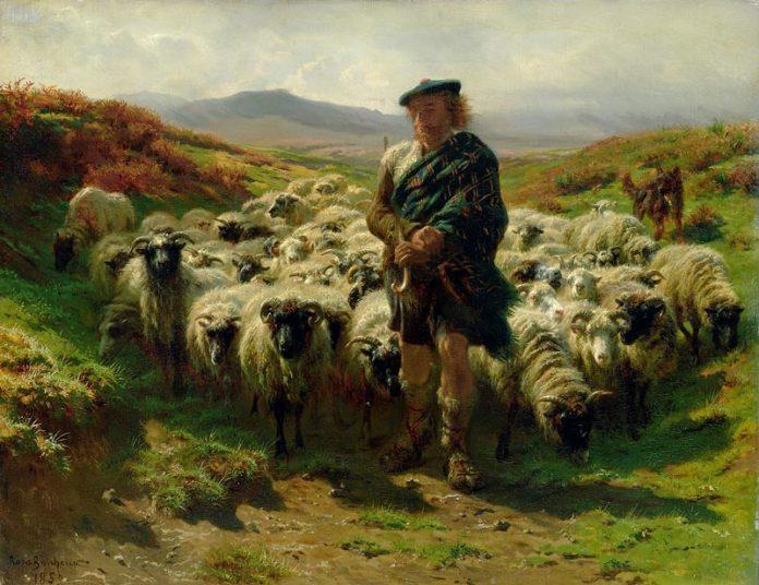 Pecore-Highlands-696x536